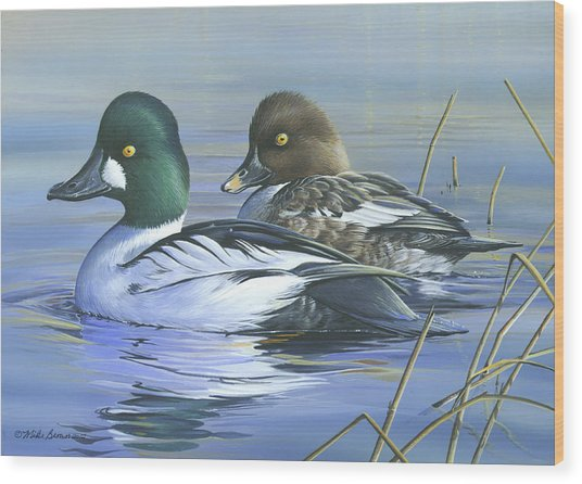 Common Goldeneye Wood Print
