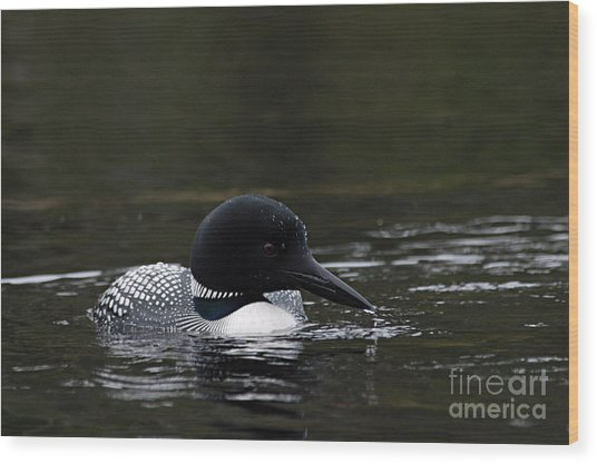 Common Loon 1 Wood Print