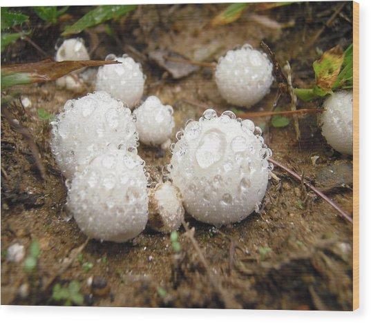 Common Puffball Dewdrop Harvest Wood Print