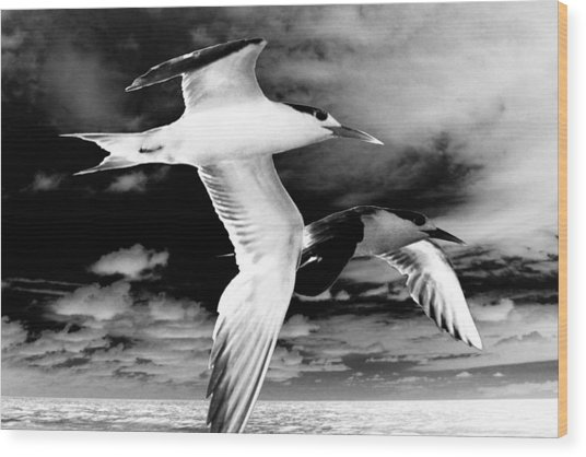 Common Terns Mono Wood Print