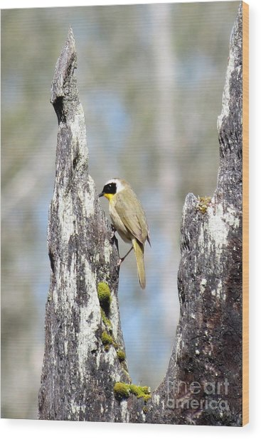 Common Yellowthroat Wood Print