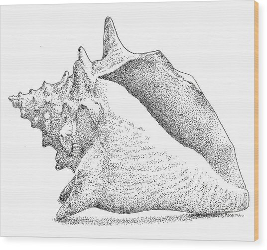 Conch Shell Wood Print by Christy Beckwith