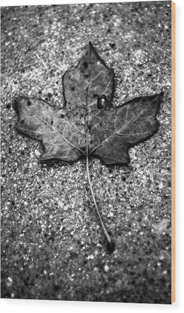 Concrete Leaf Wood Print