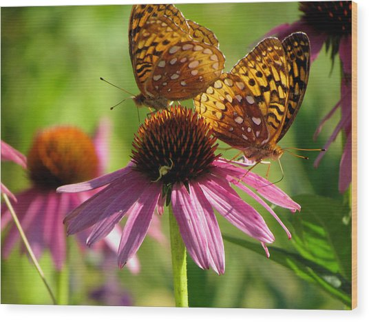 Coneflower Butterflies Wood Print