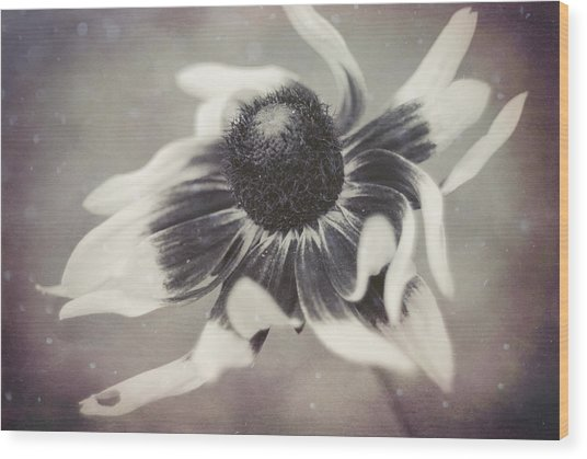 Coneflower In Monochrome Wood Print