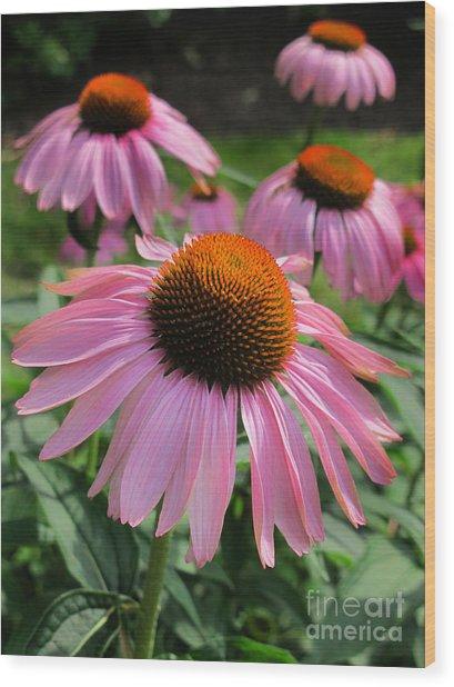 Conehead Daisy Wood Print