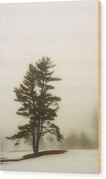 Coniferous Tree In Winter Wood Print