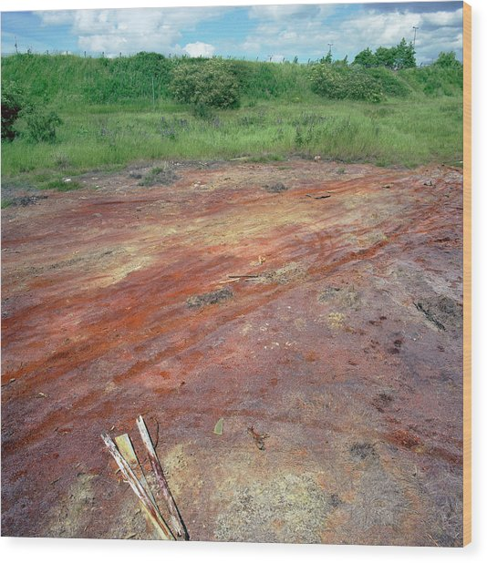 Contaminated Soil Wood Print by Robert Brook/science Photo Library