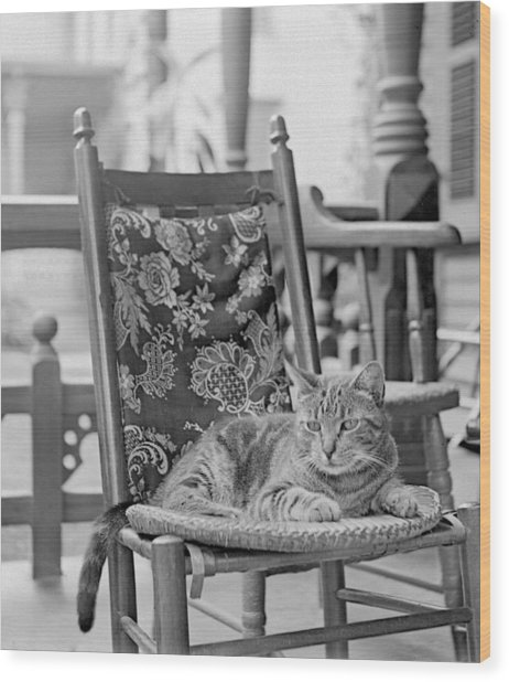 Contented Cat Wood Print