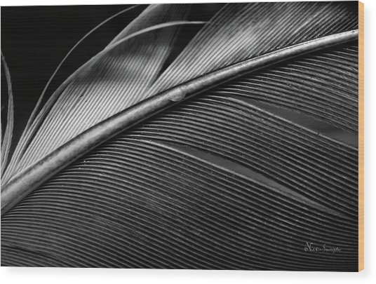 Contour Feather Wood Print