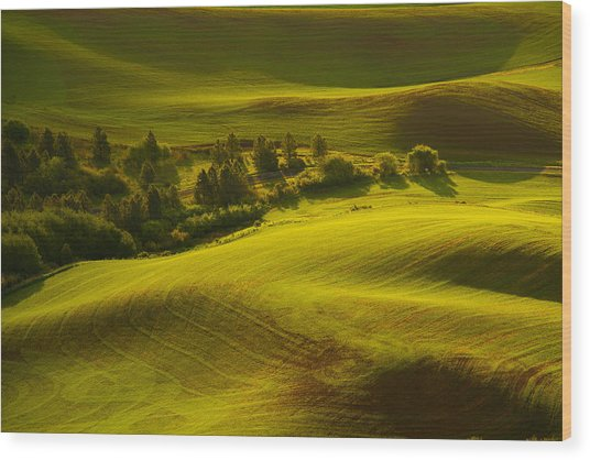 Contours Of The Palouse Wood Print