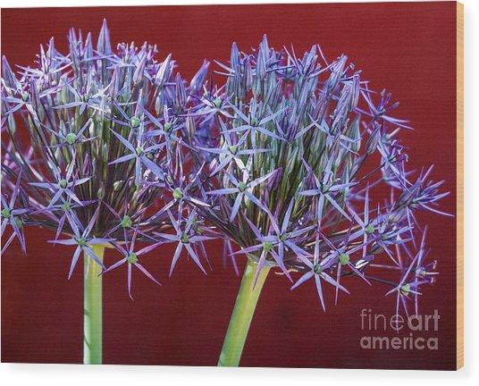 Flowering Onions Wood Print
