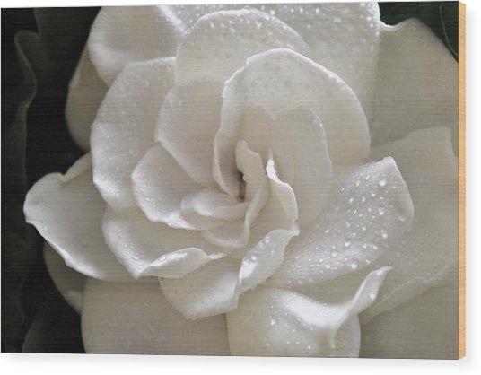 Cool Gardenia Wood Print