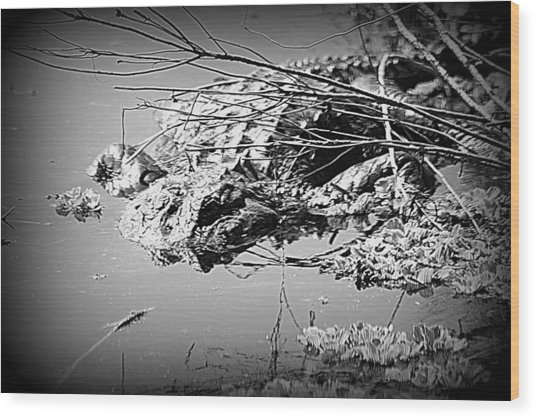 Cooling Off  B W Wood Print by Sheri McLeroy