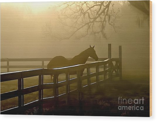 Coosaw Early Morning Mist Wood Print