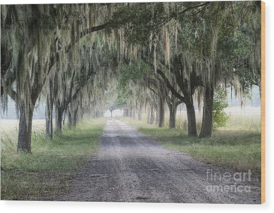 Coosaw Fog Avenue Of Oaks Wood Print