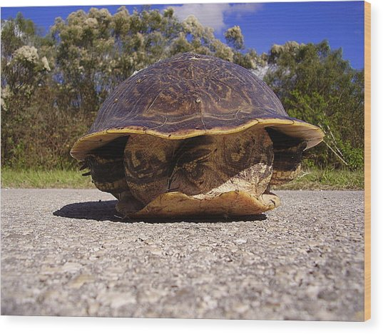 Cooter Turtle 001 Wood Print