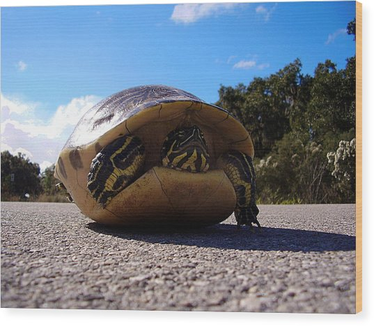 Cooter Turtle Wood Print