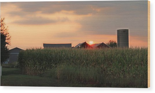 Coountry Sunset Wood Print by Victoria Sheldon