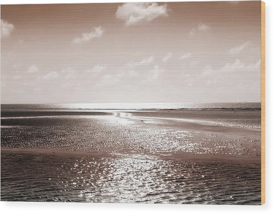 Copper Beach Wood Print