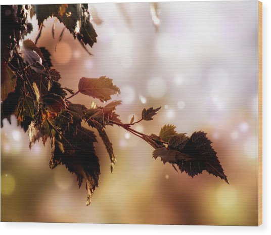 Wood Print featuring the photograph Copper Birch by Valerie Anne Kelly