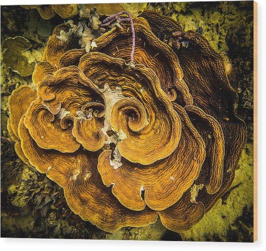 Coral Farming Wood Print