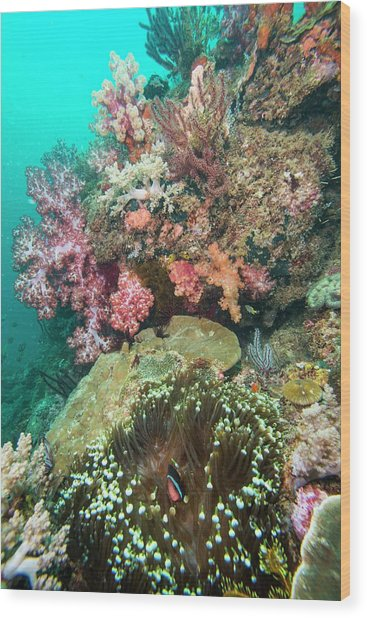 Coral Reef With An Anemonefish Wood Print