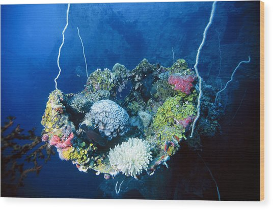 Corals On Ship Wreck Wood Print