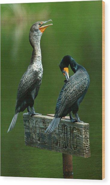 Cormorant Courtship Wood Print