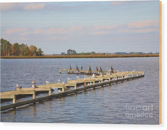 Cormorants And Seagulls On Old Dock Near Blackwater  National Wildlife Refuge Near Cambridge Md Wood Print