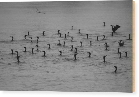 Cormorants Wood Print