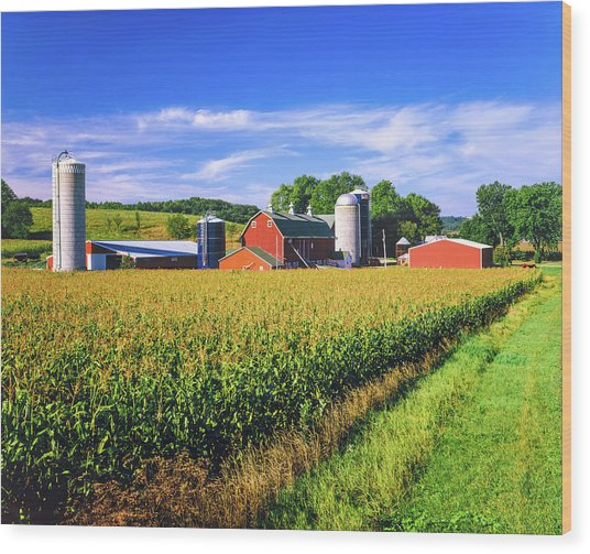 Corn Crop And Iowa Farm At Harvest Time Wood Print by Ron thomas