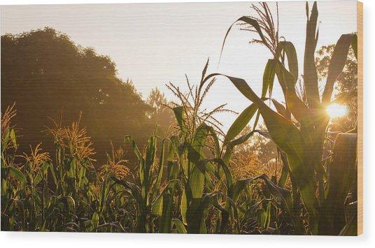 Corn In The Sunlight Wood Print by Cristin Sirbu