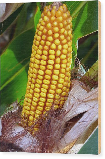 Wood Print featuring the photograph Corn On The Cob by Jeff Lowe