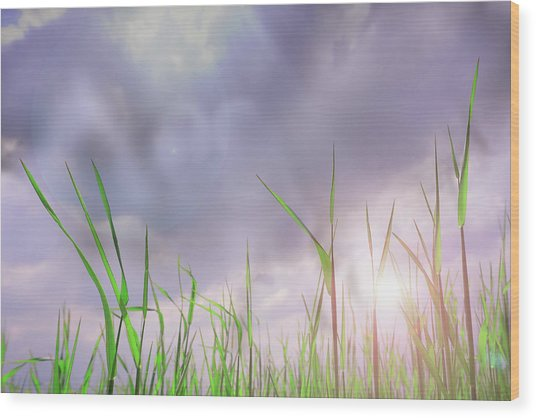 Corn Plant With Thunderstorm Clouds Wood Print by Silvia Otte