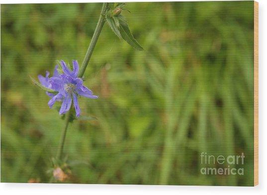 Cornflower In The Fields Wood Print by Jolanta Meskauskiene