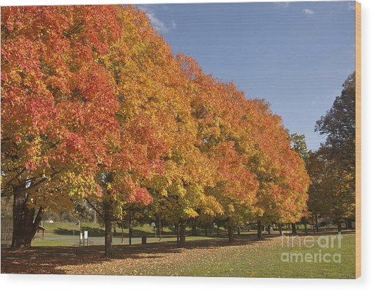 Corning Fall Foliage 2 Wood Print