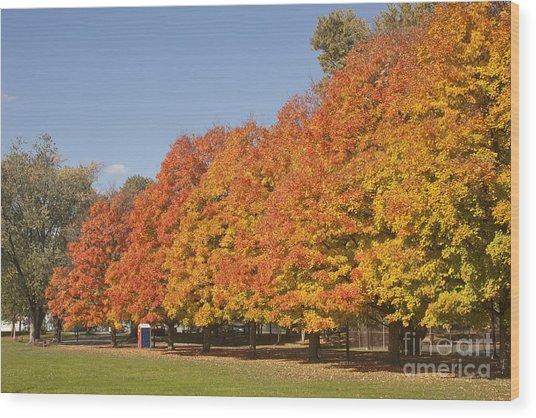Corning Fall Foliage 3 Wood Print