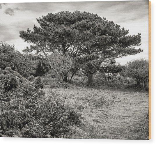 Cornish Delights Wood Print