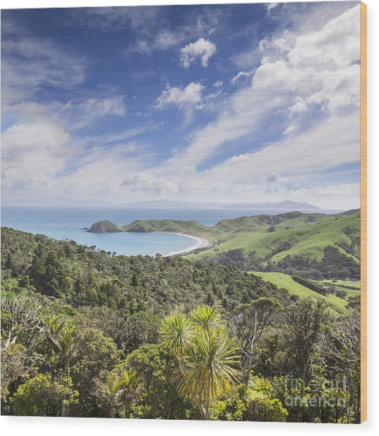 Coromandel Port Jackson New Zealand Wood Print