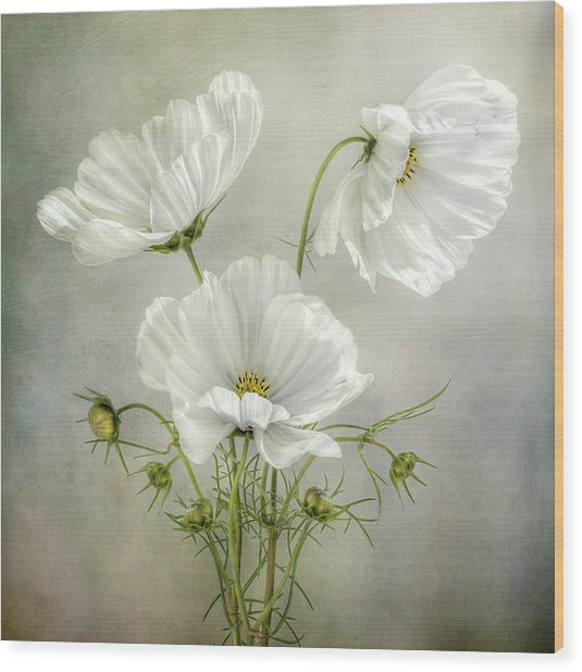 Cosmos Charm Wood Print by Mandy Disher