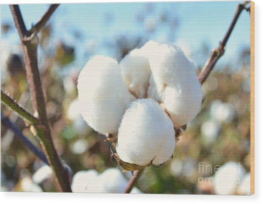 Cotton Boll Iv Wood Print