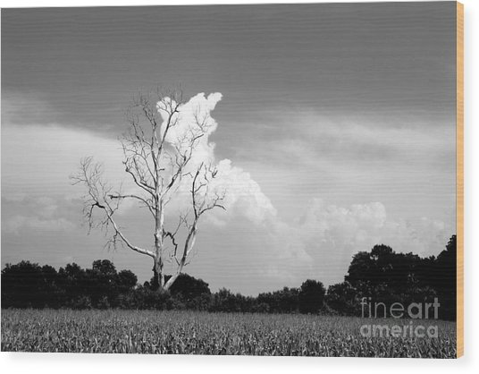 Cotton Candy Tree - Clarksdale Mississippi Wood Print