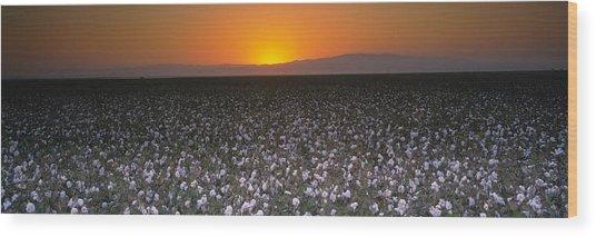 Cotton Crops In A Field, San Joaquin Wood Print