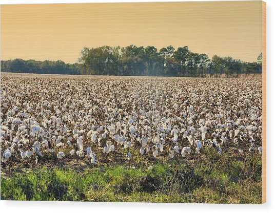 Cotton Fields Back Home Wood Print