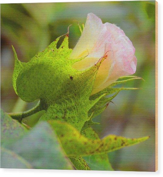 Cotton Flower Wood Print by Julie Cameron