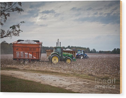 Cotton Harvest With Machinery In Cotton Field Wood Print