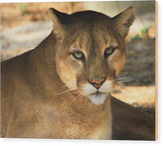 Cougar II Wood Print