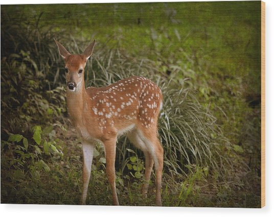 Could It Be Bambi Wood Print