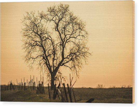 Country Fence Sunset Wood Print